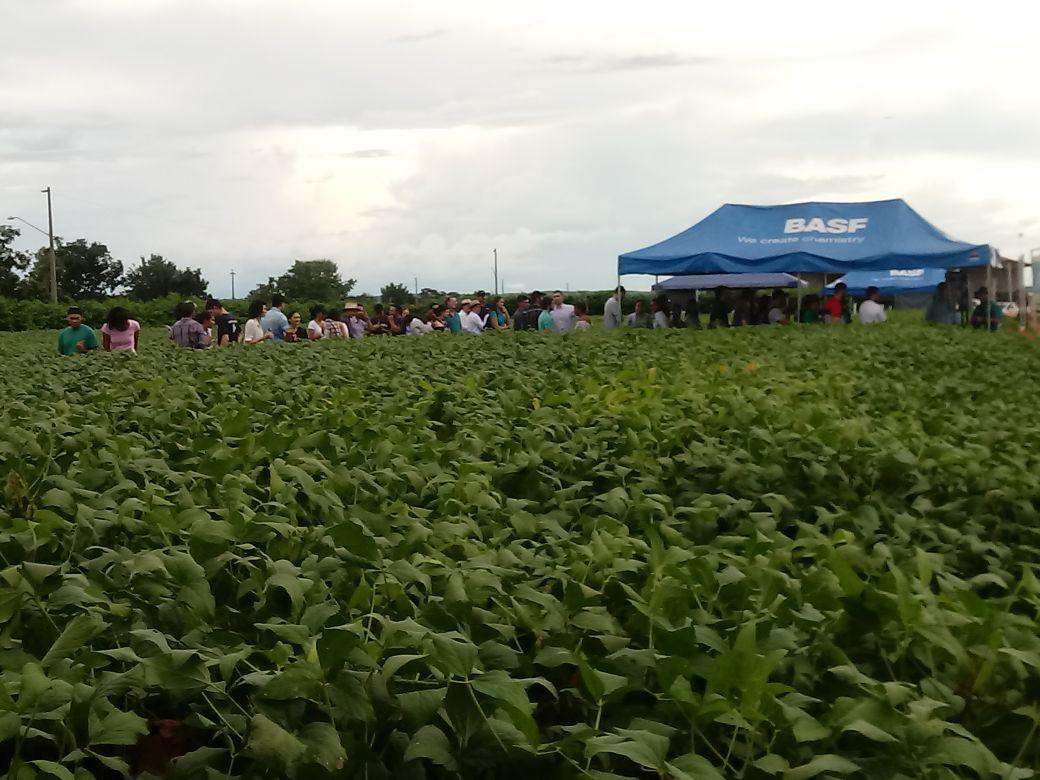 Profissionais da Basf falam sobre plantio da soja e tendências para a cultura.