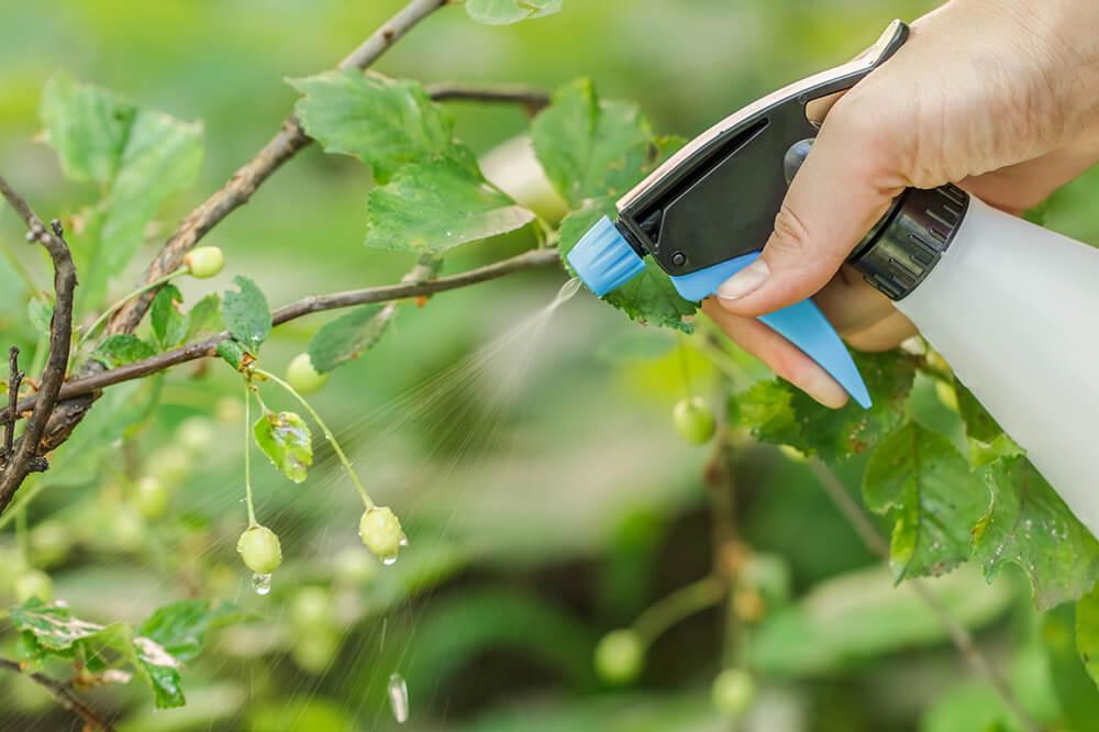 Palestra da Unitins apontará eficiência da adubação foliar em culturas