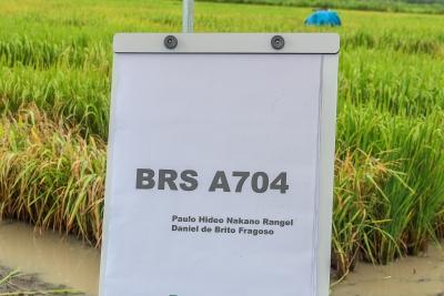 Unitins e Embrapa apresentam nova cultivar de arroz na Agrotins 2020; variedade é própria para cultivo no TO