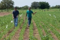 Pesquisadores da Unitins acompanham desenvolvimento de lavouras experimentais